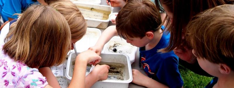 a picture of children inspecting bugs in water
